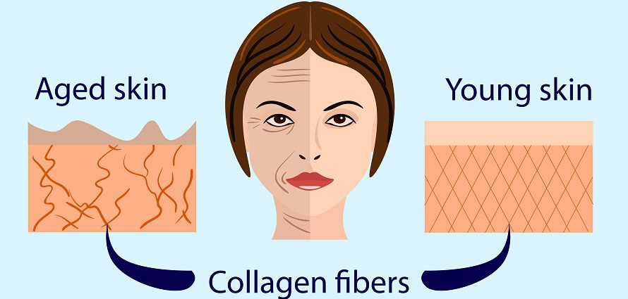 illustration showing how collagen supports skin
